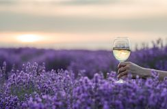 Бокал вина в руке на поле лаванды на заходе солнца Стоковая Фотография