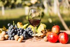 Бокал вина с сбором осени Стоковые Изображения