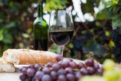 Бокал вина и зрелые виноградины в винограднике Стоковое Изображение RF