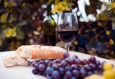 Бокал вина и зрелые виноградины в винограднике Стоковое фото RF