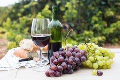 Бокал вина и зрелые виноградины в винограднике Стоковые Фото