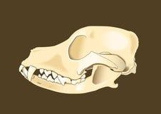 Боковая часть черепа собаки Стоковая Фотография RF