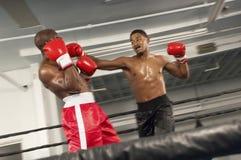 2 боксера воюя в кольце Стоковое Фото