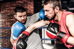 2 боксера спортсменов sparred в кольце Стоковые Изображения