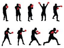 боксеры Стоковая Фотография
