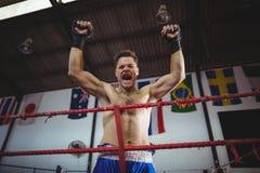 Боксер представляя после победы стоковые фото