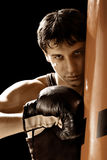 боксер Стоковая Фотография RF