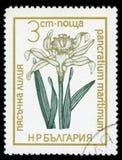 ` Болгарии защитило штемпель почтового сбора серии ` цветков, 1972 стоковое фото rf