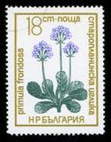 ` Болгарии защитило штемпель почтового сбора серии ` цветков, 1972 стоковое изображение