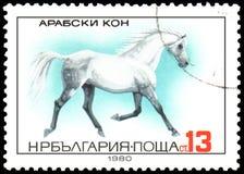 БОЛГАРИЯ - ОКОЛО 1980: штемпель, напечатанный в Болгарии, показывает аравийскую лошадь иллюстрация штока