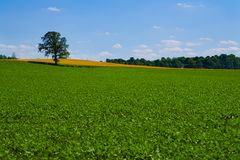 более зеленые выгоны Стоковая Фотография