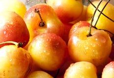 Более ненастные вишни Стоковые Изображения
