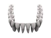более низкие зубы 1 Стоковая Фотография