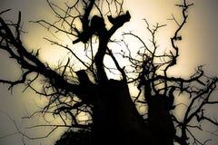 более предыдущий туманнейший вал силуэта утра стоковое изображение