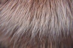 Более тщательное рассмотрение на мехе лисы стоковое изображение rf