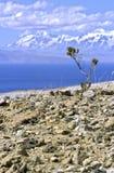 Боливия del isla sol Стоковое фото RF