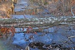 Болота, каналы и озера Стоковая Фотография RF