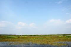 болотистая низменность сценарная Стоковая Фотография RF