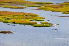болотистая низменность Стоковые Фотографии RF