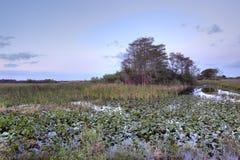 болотистые низменности рассвета Стоковые Изображения