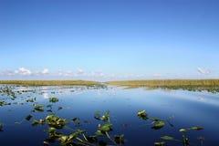 болотистые низменности Стоковые Фото