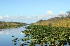болотистые низменности Стоковые Изображения