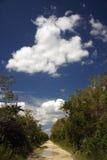 болотистые низменности backroad Стоковая Фотография RF