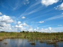 болотистые низменности florida Стоковые Изображения RF