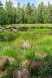 Болотистые торошения около озера, Швеции Стоковые Фото