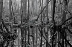 болотоы Стоковое Изображение RF