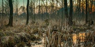 болото весны на окраинах города стоковое изображение