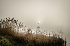 Болото в тумане Стоковое Фото