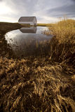 болото землянки амбара старый Стоковое Изображение RF