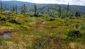 Болото и лес в лете Стоковая Фотография