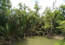 Болото и мангрова 2 стоковое изображение rf