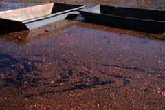 болото клюквы Стоковое Изображение RF
