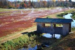 болото клюквы Стоковое Фото