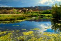 Болото Колорадо в поздним летом стоковые изображения