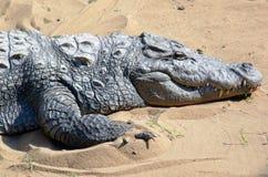 болото крокодила Стоковая Фотография