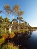 болото ландшафта Стоковое Фото