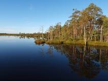 болото ландшафта Стоковая Фотография