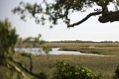 болото ландшафта Стоковое Изображение
