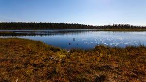 Болото около соснового леса в полдень, Karelia, Россия стоковое изображение