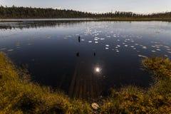 Болото около соснового леса в полдень, Karelia, Россия стоковые изображения rf