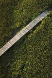 болото променада сверх Стоковые Фотографии RF