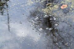 болото стоковая фотография