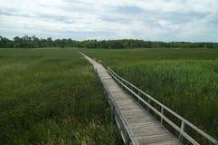 болото Стоковые Изображения RF