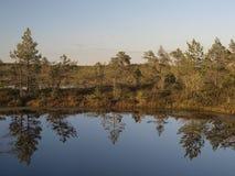 болото hags Стоковые Фото
