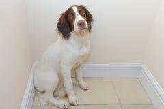 Больная собака Стоковая Фотография RF