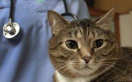 Больной кот tabby навещает ветеринар Стоковая Фотография